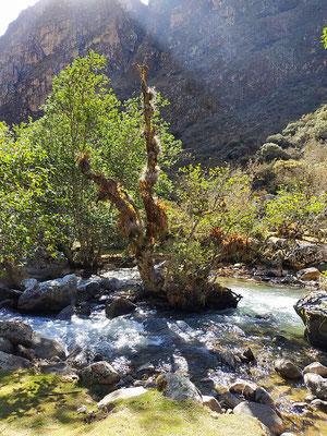 Toujours la rivière mais la végétation se fait plus dense