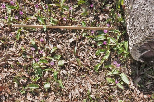 写真1(d).区域D 南側の群生景観
