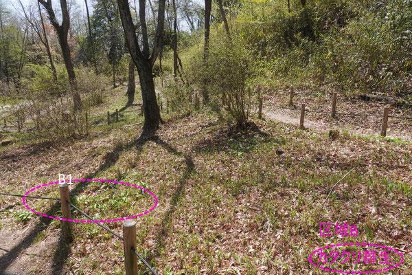 写真1(b).区域Bの景観