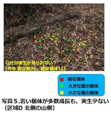 写真5.若い個体が多数成長も、実生少ない