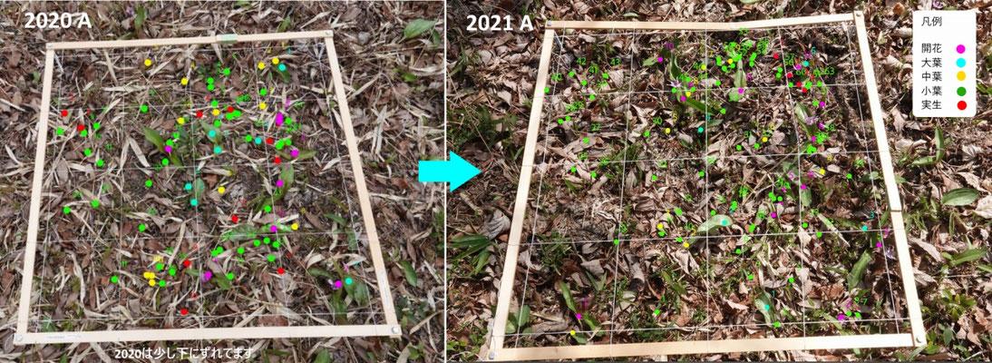 写真2(a).コドラートの定点観測地点Aの生育状況