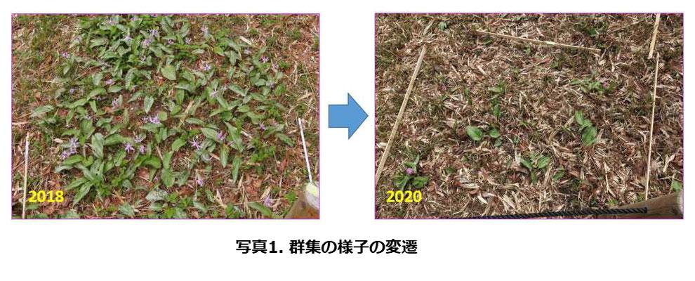 写真1.群集の様子の変遷