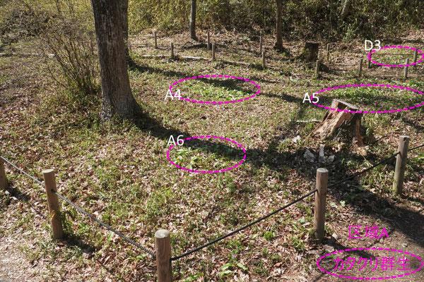 写真1(a).区域Aの景観