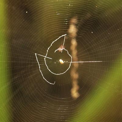 写真5.ナスカの地上絵のような隠れ帯?