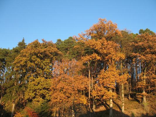 Naturabilis - Wald
