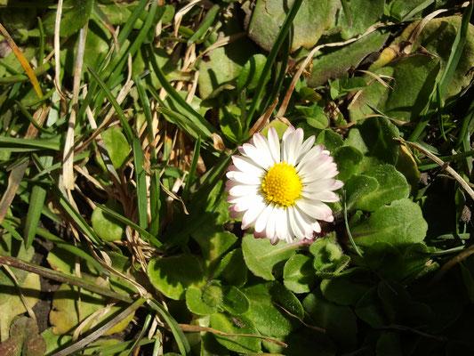 Naturabilis - Essbare Natur