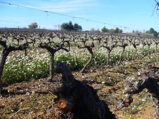 自然派のワイン作り