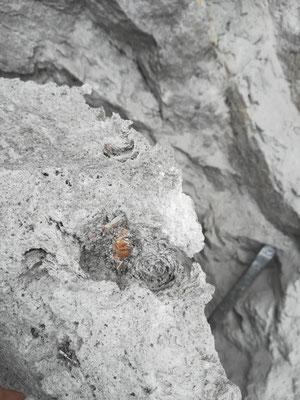 Topas auf Matrix Größe Kristall 1 cm