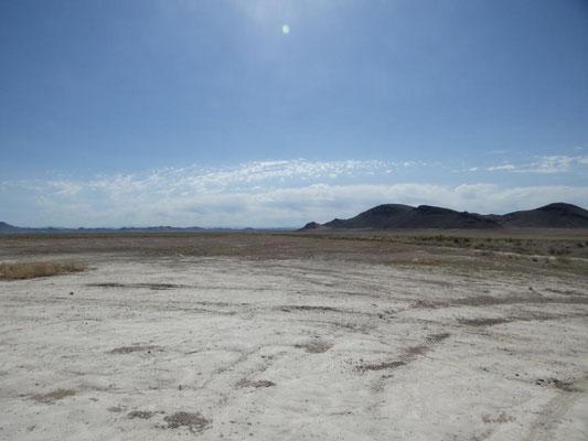 Wüste nach dem Regen