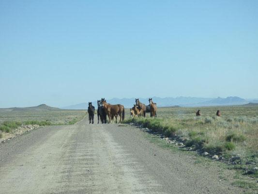 wilde Mustangs