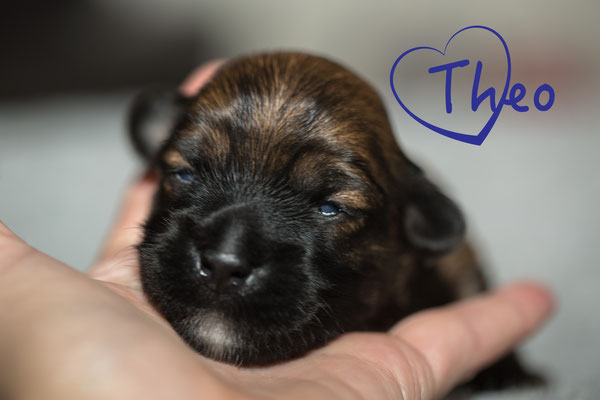 Theo, er öffnete als Zweiter seine Augen