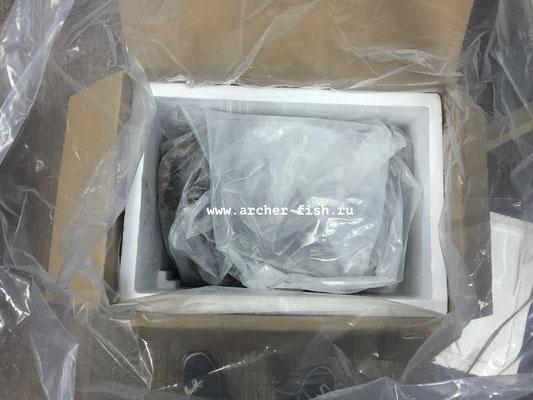 Внутри коробки упакованы ЖК. Вид сверху