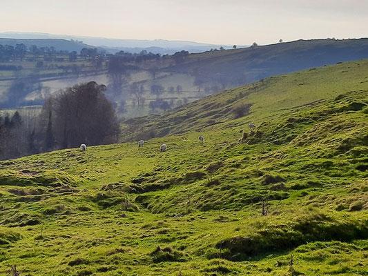 Carsington Pastures