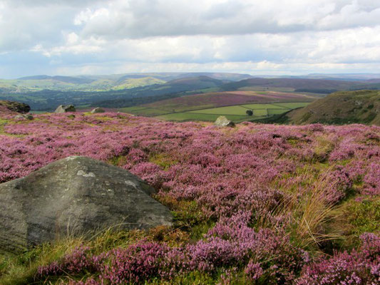 Heather near Stanage Edge
