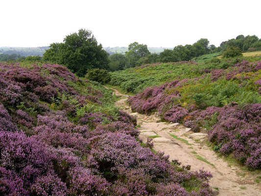 Path over Stanton Moor