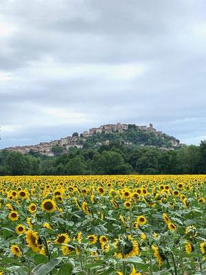 Village de Cordes sur Ciel / Au mas de Janita ©