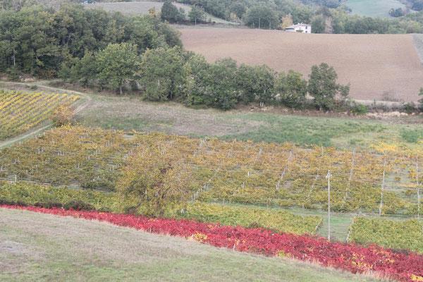 Un contraste de couleurs propre au terroir local de Gaillac / Au mas de Janita ©