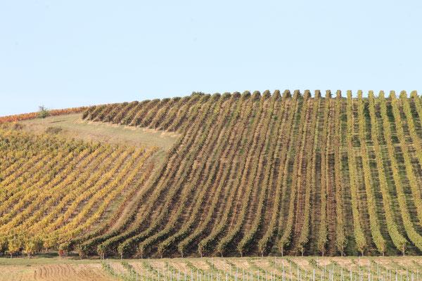 Une pluralité de domaines viticoles à explorer ! Au mas de Janita ©