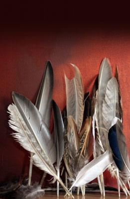 Dekoration mit Federn
