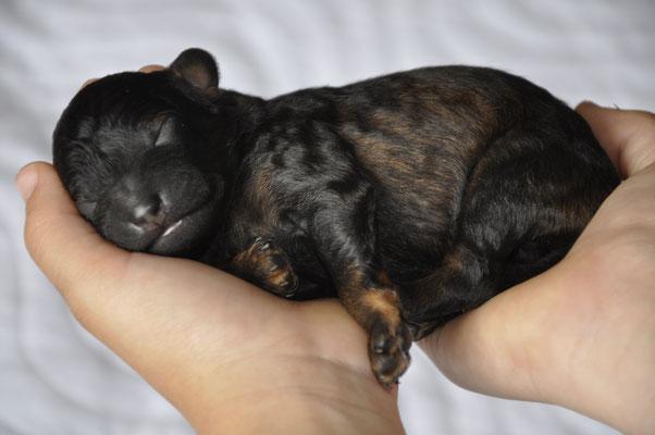 Balou 4 Tage alt. Geburtsgewicht 160g / heute Morgen 235g