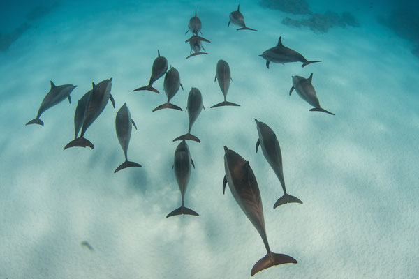 free diving with dolphins scuba diving website for women