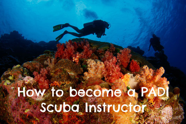 how to be a scuba instructor