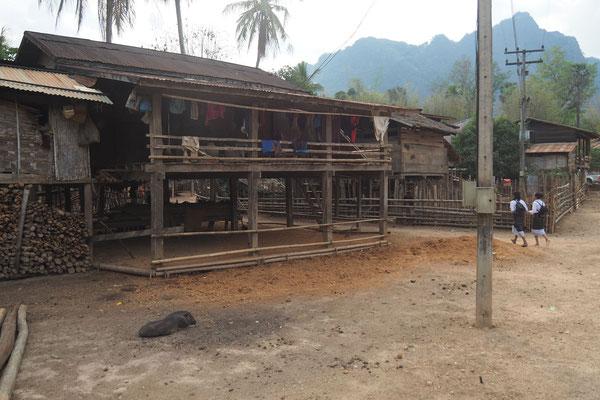 speziell in Laos sehen wir sehr viele Schweine frei in den Dörfern herum laufen