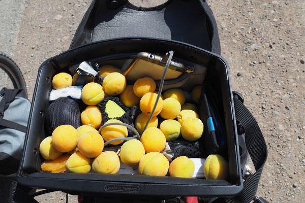 Abrikosen bekamen wir von einem Obstverkäufer auf einem Pass