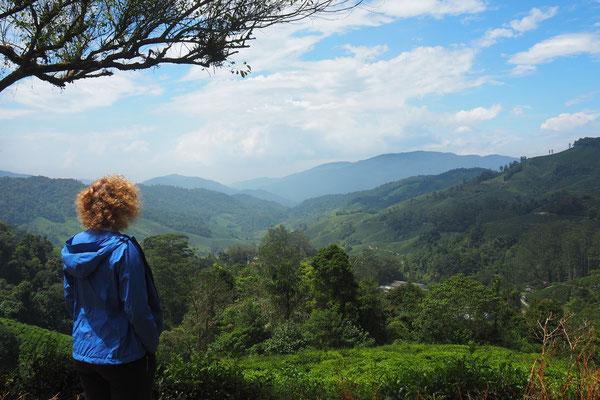 Blick über die Teeplantage  - Radreise - Cycletouring - Thailand