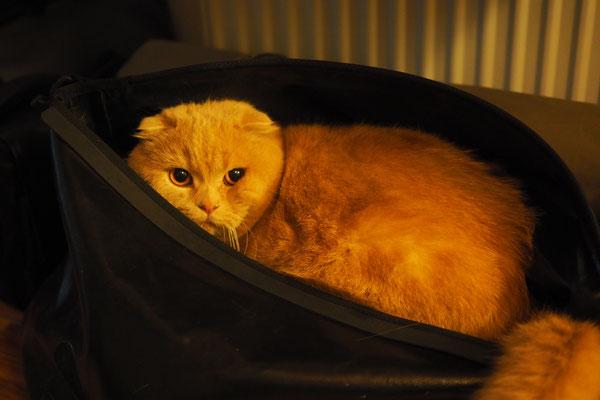 Sid mag das Rackpack ebenfalls  (Katze unseres Warmshowers-Host)