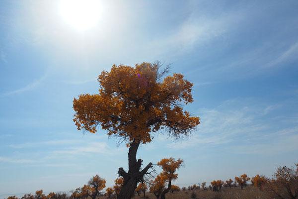 Ein weiterer Herbstbaum