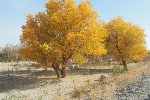 Crossing Xinjiang by bike on G315 - autumn in the desert