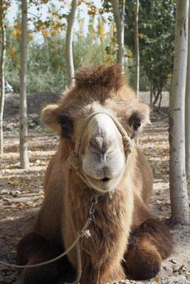 Hallo ich bin ein Kamel;)