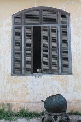 Katzen sind hier eher selten