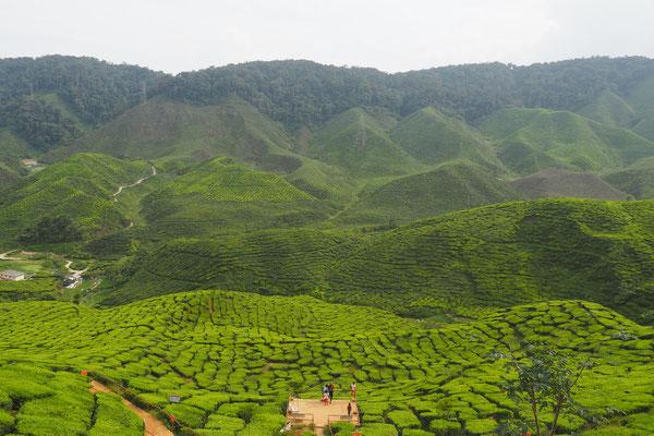 Tee Tee und noch mehr Tee  - Radreise - Cycletouring - Thailand