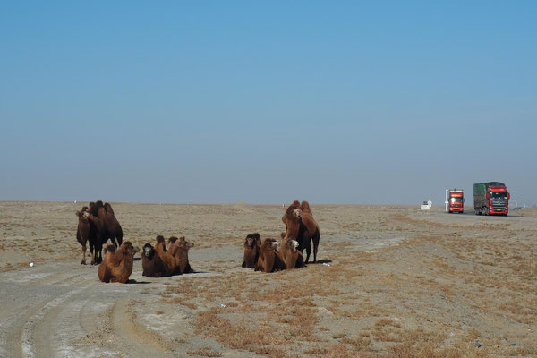 Noch mehr Kamele