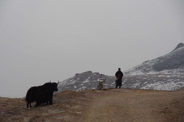 Der Wächter der Yaks