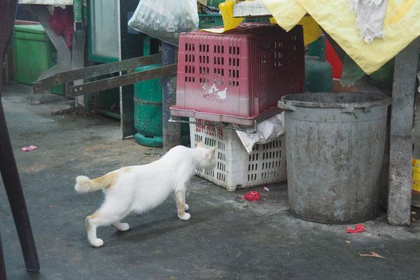 Auch die Straßenkatzen: Stummelschwanz - Radreise/Cycletouring - Alles in 12 Taschen - Malaysia
