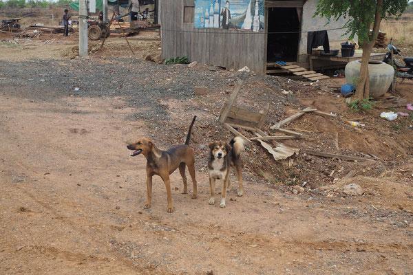 Hunde gibt es hier viele - fast alle sehen auch gesund und gut genährt aus.