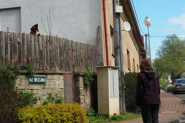 Lena und die Hunde...