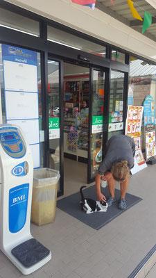 Auch die Katzen wissen, dass es im 7-Eleven schön kühl ist.