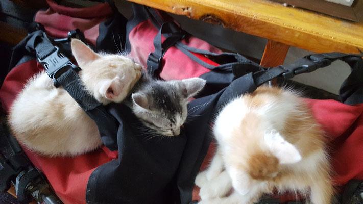 Die Katzen wollten mit  - Radreise/Cycletouring - Alles in 12 Taschen - Malaysia