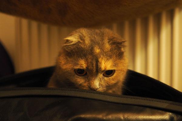 Juri im Rackpack (Katze unseres Warmshowers-Host)