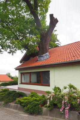 Baum im Haus - oder Haus um Baum???