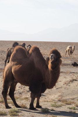 Ein Blick in die Kamara