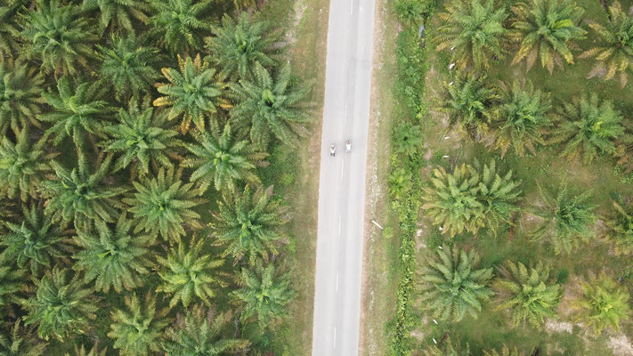 Palmplantagen  - Radreise - Cycletouring - Thailand
