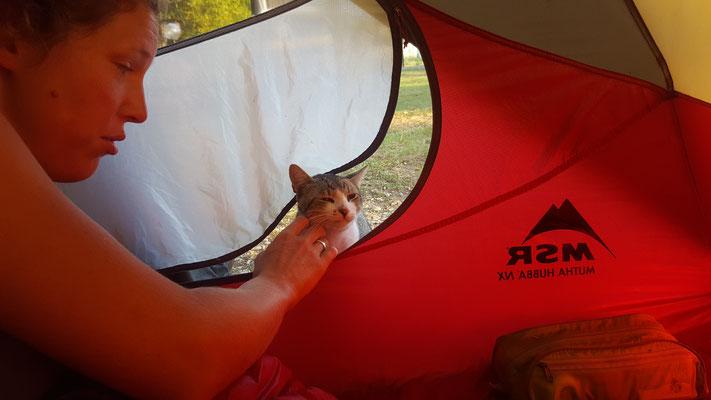 Haustiere lieben unser Zelt - Alles in 12 Taschen - Radreise