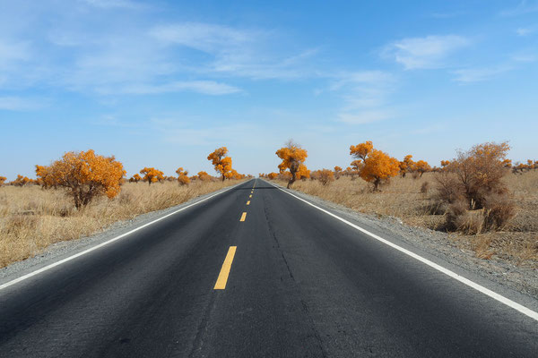 Crossing Xinjiang by bike on G315 - autumn in the desert