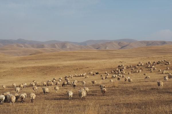 endlos weite Flächen für Schafe, Kühe, Yaks und Pferde