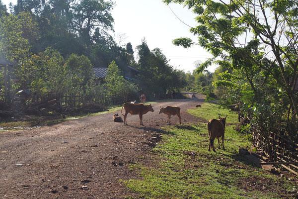 Kühe, Hunde, Schweine, Hühner - alles läuft, steht oder liegt auf der Straße herum